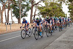 FDJ Nouvelle Aquitaine Futuroscope and Team TIBCO - SVB lead the bunch at Stage 1 of 2020 Santos Women's Tour Down Under, a 116.3 km road race from Hahndorf to Macclesfield, Australia on January 16, 2020. Photo by Sean Robinson/velofocus.com