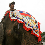 Laotian mahouts and with their elephants gather at the second annual Elephant Festival in Paklay, Laos, Thursday, Feb. 14, 2008.