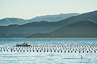 Criação de ostras no Ribeirão da Ilha. Florianópolis, Santa Catarina, Brasil. / Oyster farming at Ribeirao da Ilha district. Florianopolis, Santa Catarina, Brazil.