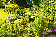 Yellow Welsh poppies and perennials in border of country garden, Wiltshire, England, Uk