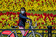 Enjoying the flowers arounf the Victoria Monument - People are out exercising on bikes and on foot, some in masks and some not. Central London is pretty crowded as the sun comes out again. The 'lockdown' continues for the Coronavirus (Covid 19) outbreak in London.