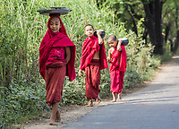 CHAUNG-U, MYANMAR - DECEMBER 01, 2016 : children boys monks walking on a road near Monywa Myanmar (Burma)