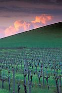 Sunset light on thunderstorm Cumulonimbus storm clouds over barren wine vineyard in spring, Carneros Region, Napa County, California