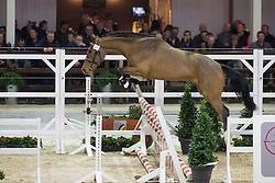 067, Cortez Del Mar Z<br /> BWP Hengsten keuring Koningshooikt 2015<br /> © Hippo Foto - Dirk Caremans<br /> 21/01/16