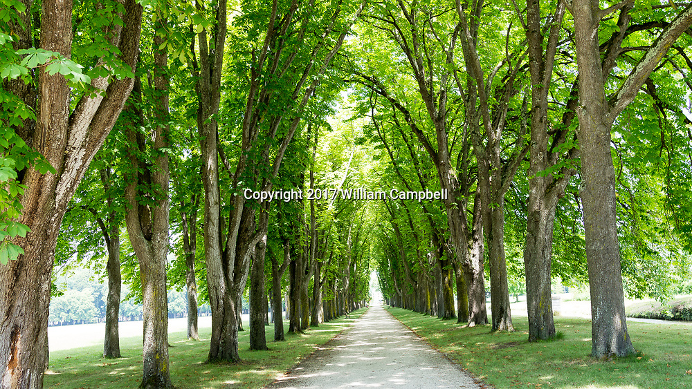 A tunnel of tress on the tree lined grounds of the former Chateau de Richelieu in the Loire Valley, France.