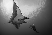 Giant Manta Ray and Photographer<br /> <br /> Shot in Mexico