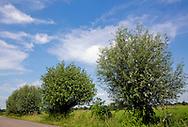 Hoogland en Nijkerk, 06-09-2015<br /> <br /> <br /> <br /> Green surroundings of Hoogland and Nijkerk.<br /> <br /> Royalportraits Europe/Bernard Ruebsamen
