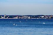Blick vom Eriskircher Ried auf Friedrichshafen, Bodensee, Baden-Württemberg, Deutschland