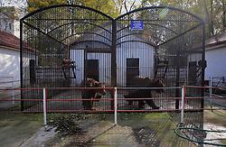 ROMANIA ONESTI 26OCT12 - Two captive Eurasian brown bears at the defunct Onesti zoo. ..The zoo has been shut down due to non-adherence with EU regulations on the welfare of animals.......jre/Photo by Jiri Rezac / WSPA......© Jiri Rezac 2012