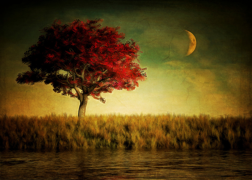 There is something about a scene such as this that evokes feelings of wandering through a dream world. This is a peaceful scene. It combines a quietly vibrant red tree with an evening backdrop. While it might be a peaceful scene, some may not interpret it that way. You may see this piece as a sinister suggestion of something that is unseen. This would be something that can see the red tree, as well. However, it is watching that red tree from a different angle than yours. It is watching that red tree from the darkness that seems to stretch out forever and ever. .<br />