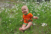 Baby boy sitting in patch of daisie flowers<br />