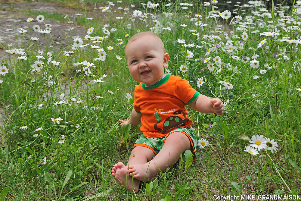 Baby boy sitting in patch of daisie flowers<br />Whiteshell Provincial Park<br />Manitoba<br />Canada