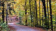 Weg, Herbst Wald bei Hinterhermsdorf, Sächsische Schweiz, Elbsandsteingebirge, Sachsen, Deutschland | road, autumn forest near Hinterhermsdorf, Saxon Switzerland, Saxony, Germany
