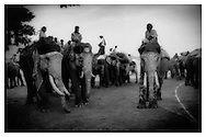 Mahouts atop decorated tuskers, Jaipur, Rajasthan.