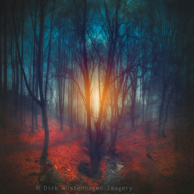 Dark fairy tale forest - photomanipulation<br />