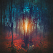 Dark fairy tale forest - photomanipulation<br /> S6 Prints: http://bit.ly/2adYR3U<br /> REDBUBBLE: http://rdbl.co/2a5pGsy<br /> CURIOOS: http://bit.ly/2alPVf6