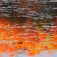 Capturing abstractions in nature is always an intriguing quest. This autumn I photographed this fall foliage abstract at Lake Waban in Wellesley, MA. There was still fall foliage colors to experience and the late afternoon drew a beautiful light on this New England nature scenery, coloring it in beautiful colors and hues. <br /> Lake Waban abstract photography pictures are available as museum quality photography prints, canvas prints, acrylic prints, wood or metal prints. Prints may be framed and matted to the individual liking and room decor needs:<br /> <br /> http://juergen-roth.pixels.com/featured/dappled-dreams-juergen-roth.html<br /> <br /> Good light and happy photo making! <br /> <br /> My best, <br /> <br /> Juergen <br /> Image Licensing: http://www.RothGalleries.com <br /> Fine Art Prints: http://fineartamerica.com/profiles/juergen-roth.html <br /> Photo Blog: http://whereintheworldisjuergen.blogspot.com <br /> Twitter: https://twitter.com/naturefineart <br /> Facebook: https://www.facebook.com/naturefineart <br /> Instagram: https://www.instagram.com/rothgalleries