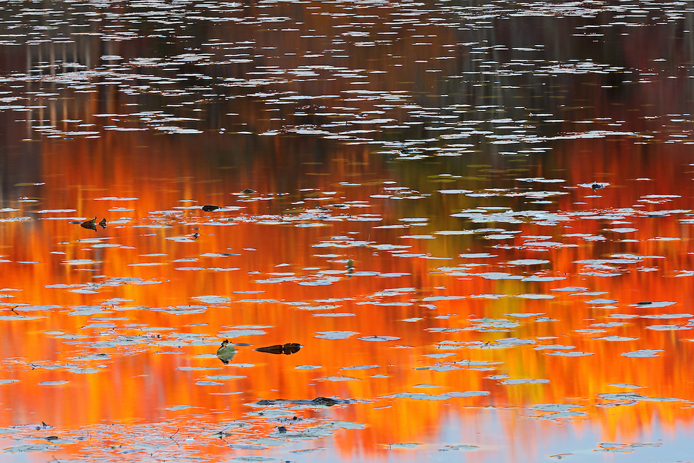Capturing abstractions in nature is always an intriguing quest. This autumn I photographed this fall foliage abstract at Lake Waban in Wellesley, MA. There was still fall foliage colors to experience and the late afternoon drew a beautiful light on this New England nature scenery, coloring it in beautiful colors and hues. <br />