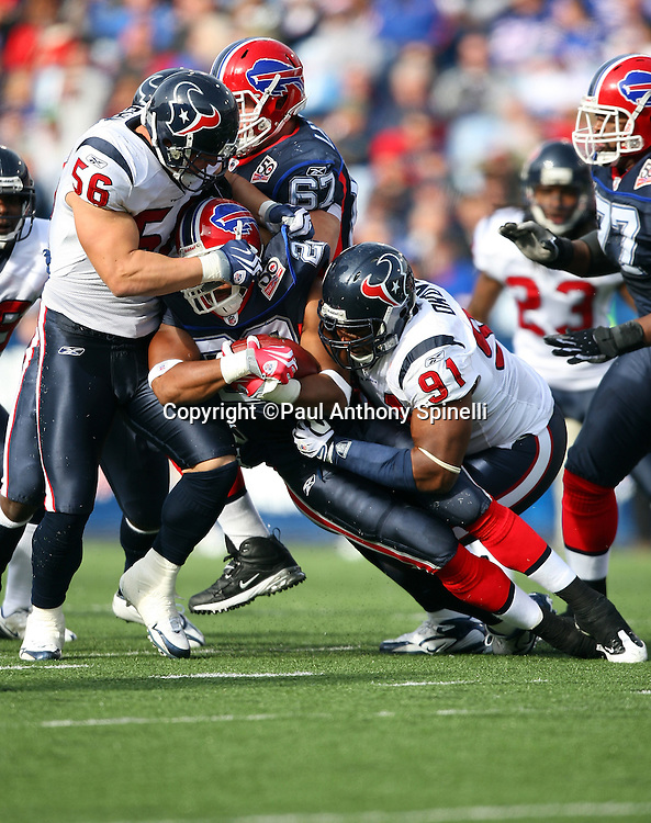 Buffalo Bills running back Fred Jackson (22) gets gang tackled by Houston Texans defensive tackle Amobi Okoye (91) and linebacker Brian Cushing (56) during the NFL football game against the Houston Texans, November 1, 2009 in Orchard Park, New York. The Texans won the game 31-10. (©Paul Anthony Spinelli)