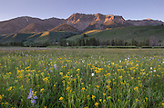Boulder Mountains Wildflower meadows, Idaho