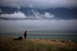 ROMANIA ZARNESTI 29OCT12 - A shepherd tends to his flock of sheep near the town of Zarnesti in the southern Carpathian mountains, Romania.....jre/Photo by Jiri Rezac..© Jiri Rezac 2012