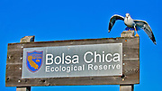 Bolsa Chica Ecological Reserve Huntington Beach