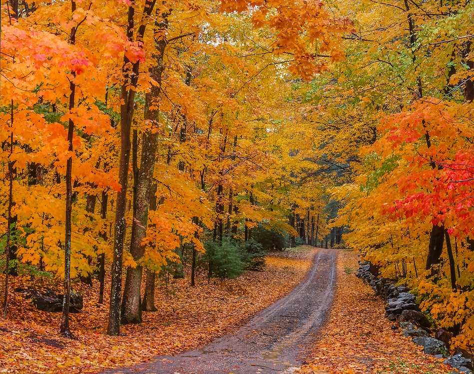 Country lane with stonewall & fall foliage, Hudson, MA