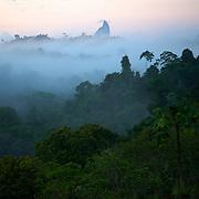 Au lever du jour la fore?t distribue ses brumes vers le ciel///At daybreak the forest distributes its fogs towards the sky