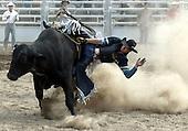 031228 Omarama rodeo