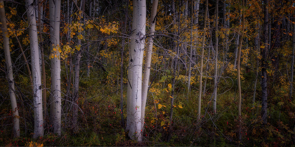 Fall in the Northwest Territories, Sept 2016