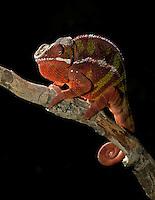 Madagascar - Ambilobe