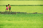 Kids walking in freshly planted rice paddies.