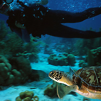 Hombre buceando con Tortuga,  fotografiada en Bonaire. (Jimmy Villalta / Orinoquiaphoto)  Diver con Turtle pictured in Bonaire (Jimmy Villalta / Orinoquiaphoto)