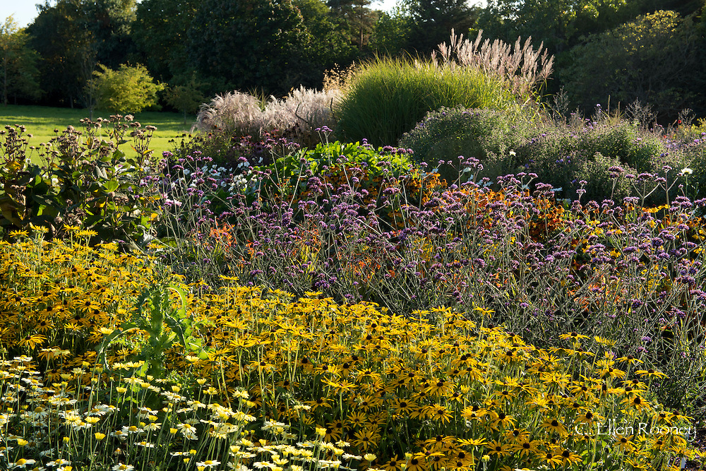 Layers of Rudbeckia (black eye Susan) and Verbena bonariensis in a broder at Waterperry Gardens, Wheatley, Oxfordshire, UK