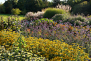Layers of Rudbeckia (black eye Susan) and Verbena bonariensis in a broder at Waterperry Gardens, Wheatley, Oxfordshire, UK