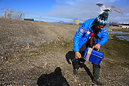 Arctic ecologist Maarten Loonen conducts research on migration of Arctic terns (Sterna paradisaea) that fly zig-zag 12,500 miles (20,000 kilometers) from Antarctica to Africa to Spitsbergen island each summer; Ny-Alesund, Kongsfjorden, Svalbard.