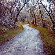 Wet Hiking Trail in Granite Bay, CA near Folsom Lake.