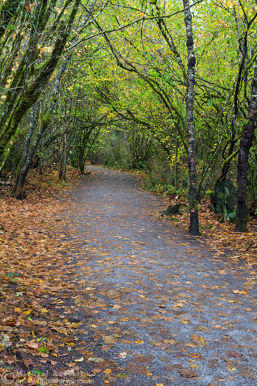 Hazelnut trees along the Little River Loop Trail in Campbell Valley Park in Langley, British Columbia, Canada