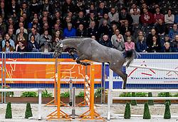 207, My Touch<br /> KWPN hengstenkeuring - 's Hertogenbosch 2020<br /> © Hippo Foto - Dirk Caremans<br />  29/01/2020