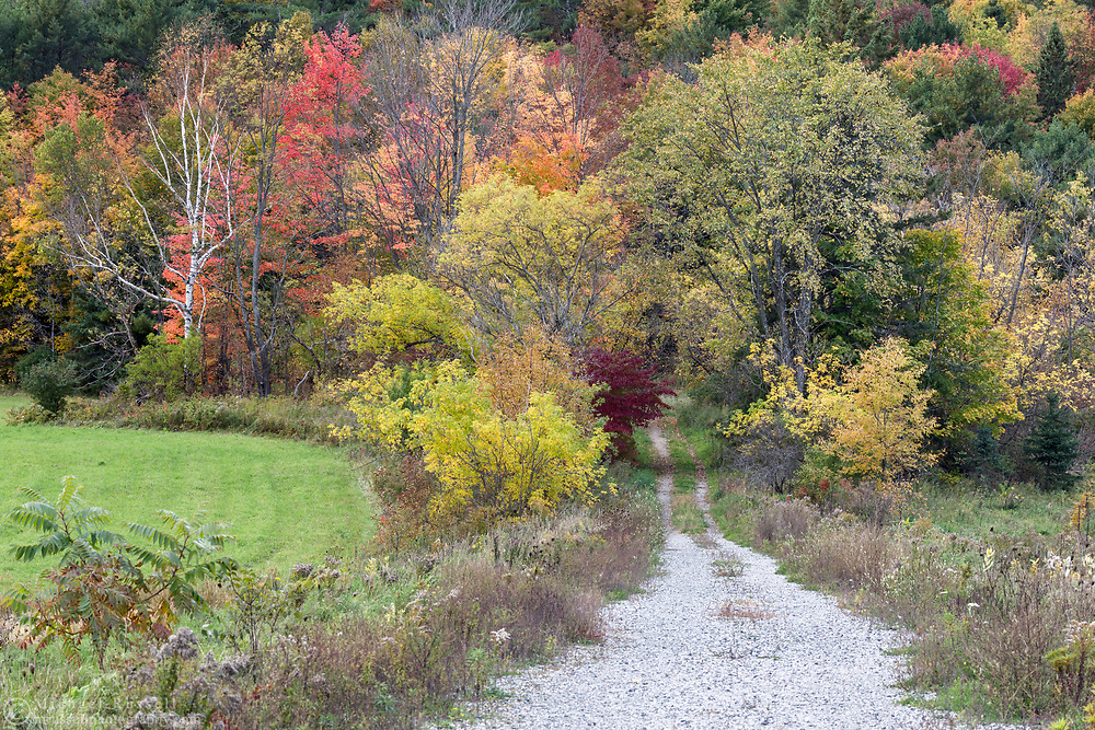 A closed road (Chemin Cafferty) disappears into the trees in Chelsea, Québec, Canada.  Photographed just north of the entrance to Gatineau Park.