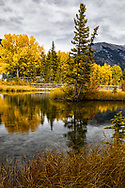 Autumn in Canmore