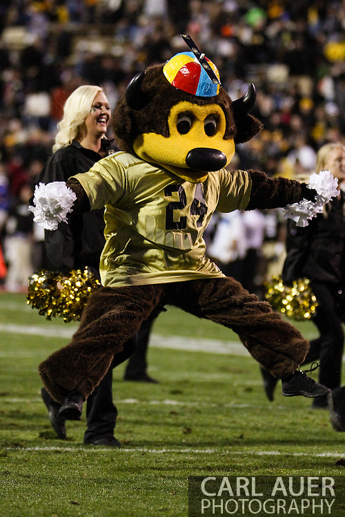 October 5th, 2013:  One of the Colorado mascots dance during a time out in action of the NCAA football game between the University of Oregon Ducks and the Colorado Buffaloes at Folsom Field in Boulder, Colorado