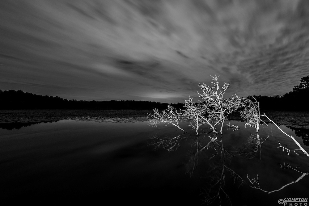 The night sky over a pond deep in the Pine Barrens in southern New Jersey.