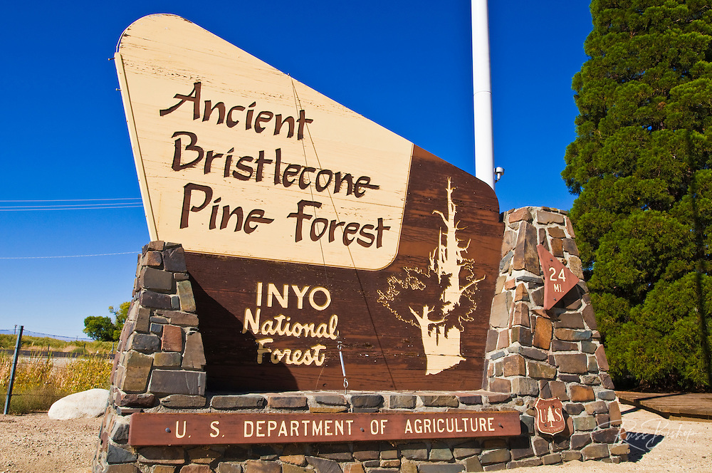 Ancient Bristlecone Pine Forest sign, Inyo National Forest, White Mountains, California