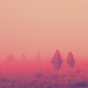 Kaziranga Through Rose Tinted Glasses