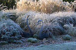 Bronze swans amongst the grasses border on a frosty morning in winter. Design: John Massey, Ashwood Nurseries