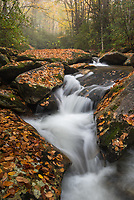 Fallen leaves stick to wet rocks along Upper Boone Fork in Western North Carolina.  A heavy rain the night before knocked the leaves down and painted the streamscape with autumn color.