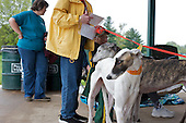 Greyhound Rescue Community