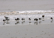 Sea gulls, tern and sand pipers on a remote section of Jekyll Island beach