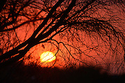 A dust storm filters the sun at sunset in the Sonoran Desert,Tucson, Arizona, USA.